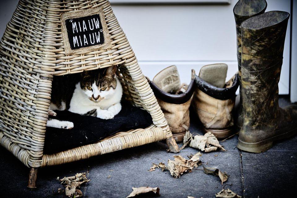 """Drei Katzen wohnen mit Luisa und ihrem Modelfreund Keno Weidner zusammen - alle tragen den Namen """"Mausi""""."""