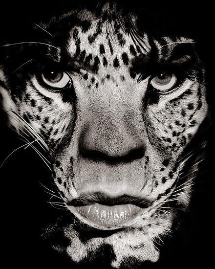Diesmal ohne Zunge, dafür als Raubkatze: Mick Jagger