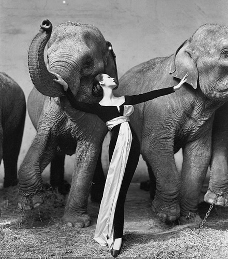 Haute Couture im Elefantenstall - ein Fotoshoot von Richard Avedon für Dior im Jahre 1955