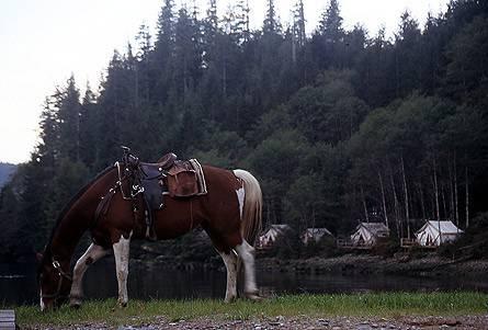 Pferdeliebhaber unter den Gästen konnten gleich einen ausgedehnten Ausflug im Sattel starten