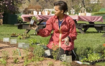 Gemeinsam mit Schülern bepflanzt Michelle Obama den Küchengarten des Weißen Hauses. Sie versichert: Kräuter und Salat stehen bei
