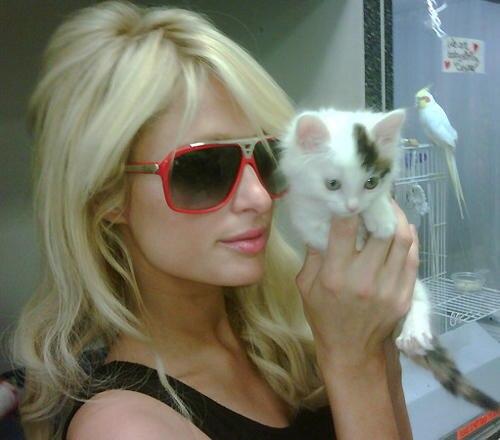 Wie Paris Hilton twittert, hat sie dieses kleine Kätzchen adoptiert.