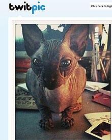 Kat Von Ds geliebte Katze Valentine kam bei dem Brand ums Leben.