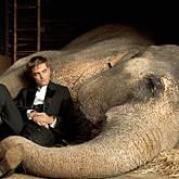 Elefantendame Tai, Robert Pattinson