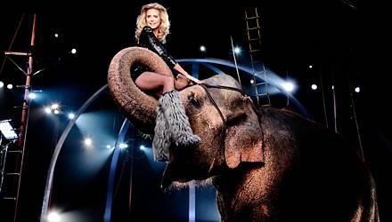 """""""Angst hatte ich nicht, aber Respekt"""", sagt Heidi Klum über die Elefanten-Szene. Hollywoods berühmteste Elefantendame Tai machte"""