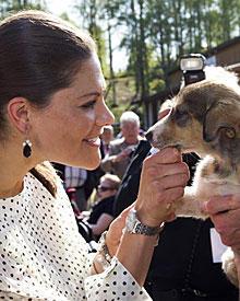 Sie herzt Kinder, alte Freunde von Daniel oder auch Schlittenhund-Welpen: Berührungsängste sind Victoria, die wie Daniel eine öf