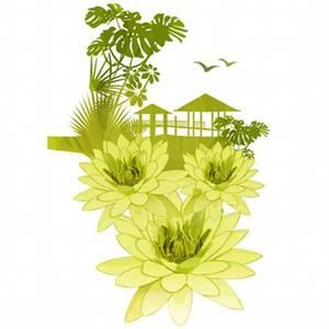 Amazonian Wild Lily