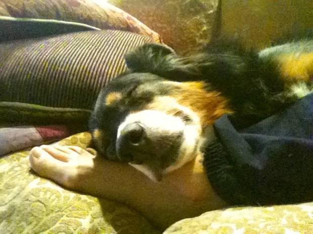 Alyssa Milano: War er nicht süß? Der australische Schäferhund Diesel kuschelt sich an sein Frauchen Alyssa Milano