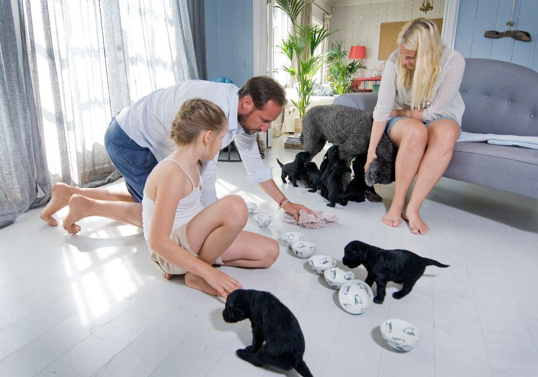 Die neun Welpen sorgen für viel Trubel im Ferienhaus der norwegischen Kronprinzenfamilie.