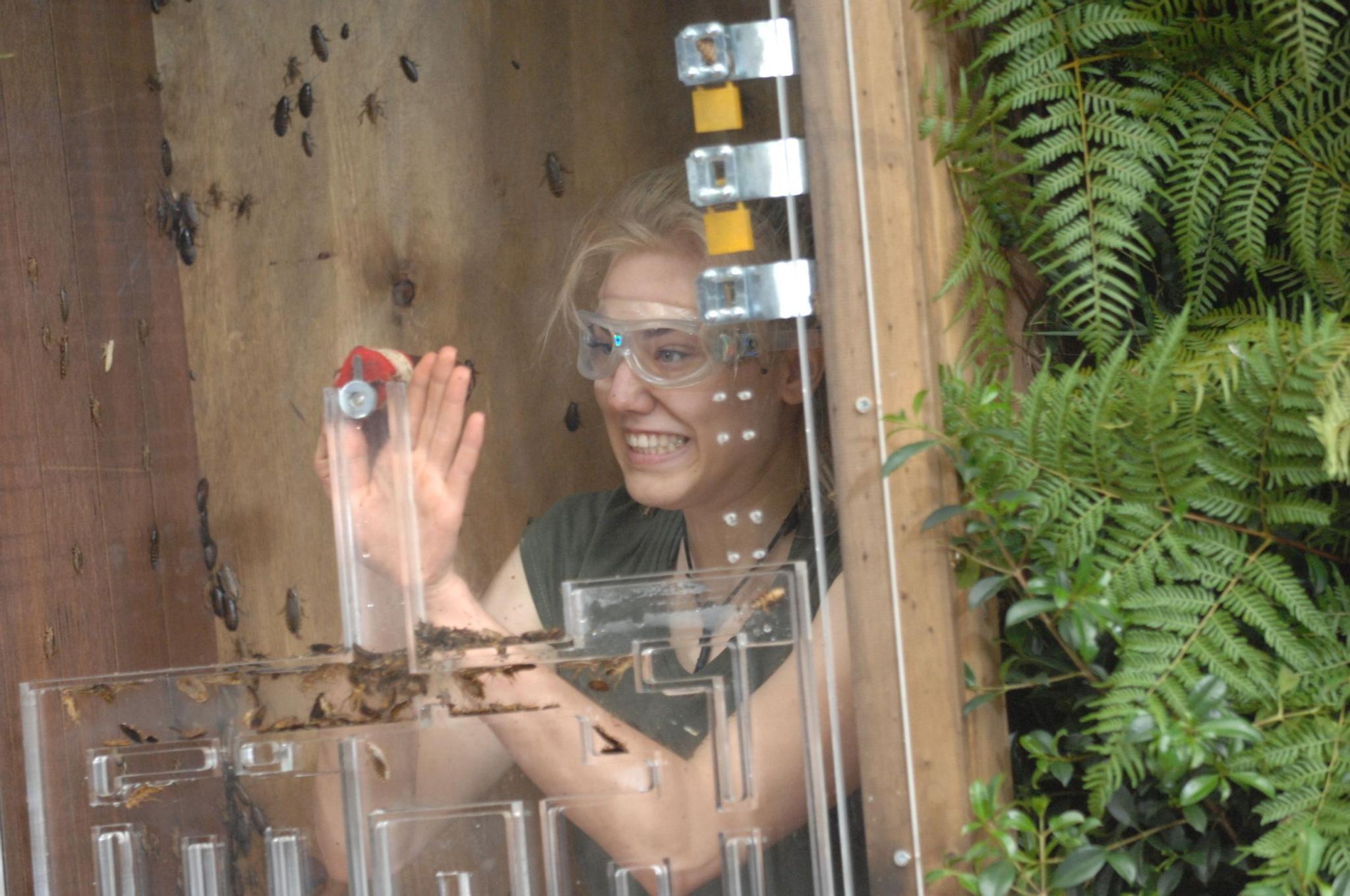 Dschungelcamp: Kakerlaken für alle