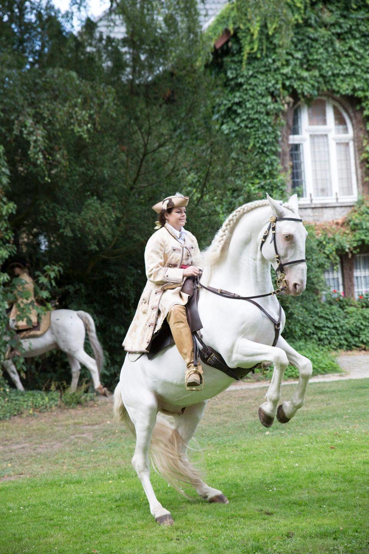 In puncto Attraktionen haben sich die zu Schaumburg-Lippes einiges einfallen lassen: In der fürstlichen Hofreitschule – die einzige in Deutschland – finden täglich Pferdevorführungen und Besichtigungen statt.