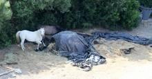 Plastikplanen, vertrocknetes Gras, daneben zwei Pferde: Boris Beckers Finca auf Mallorca ist in keinem guten Zustand.