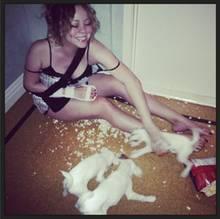 August 2013  Mariah Carey kämpft mit ihren Hunden um einen Tüte Popcorn.
