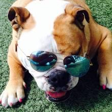 Beckhams Familienhund Coco
