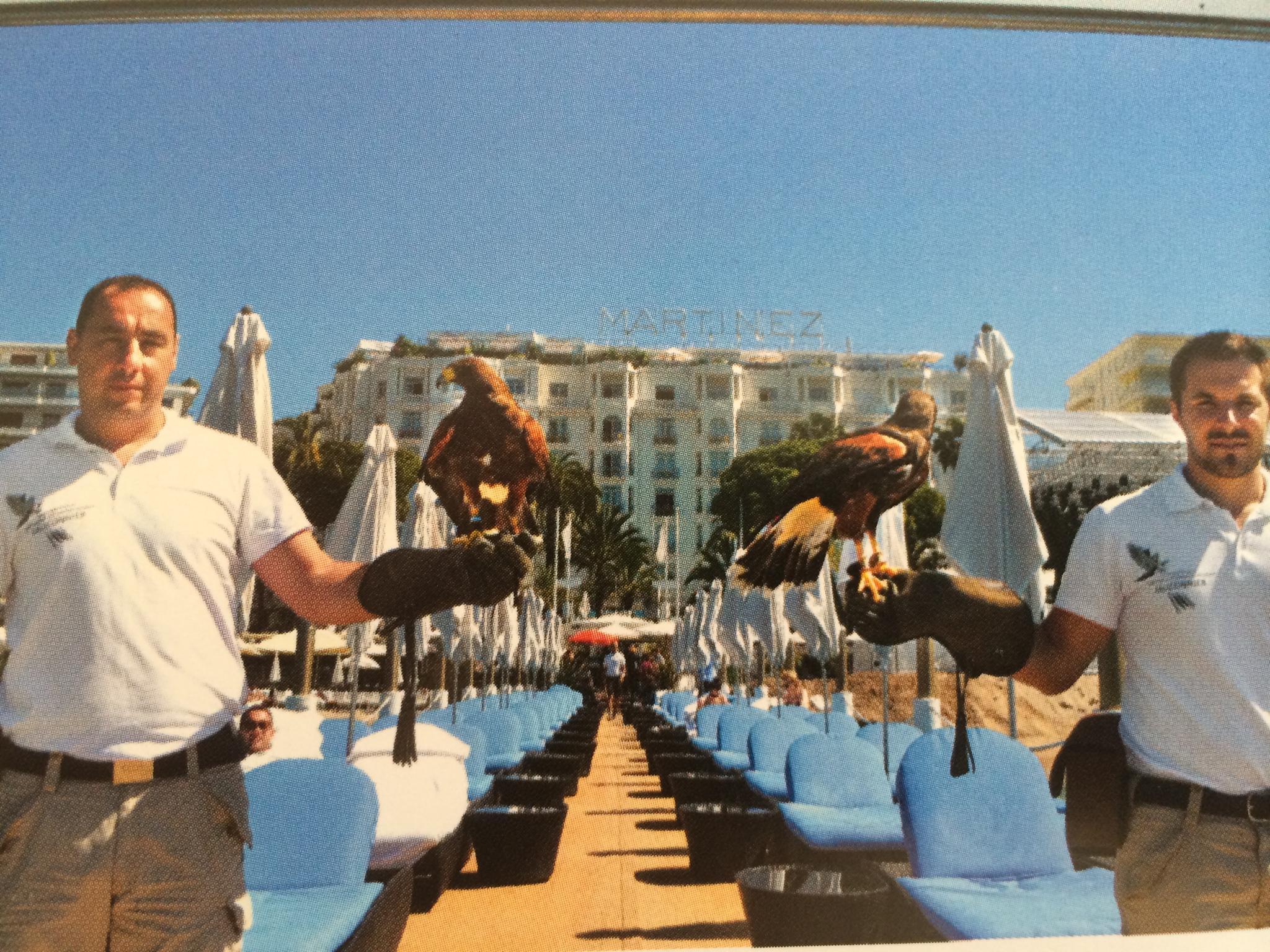 Die zwei Falken gehören zum festen Croisette-Ensemble des Hotel Martínez