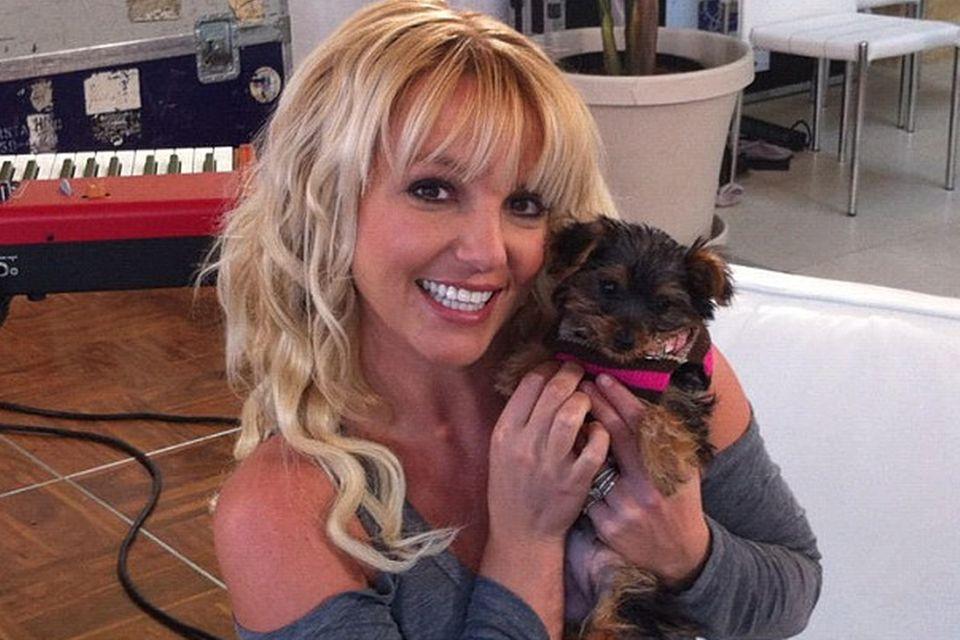 Britney Spears mit Hündchen Hannah