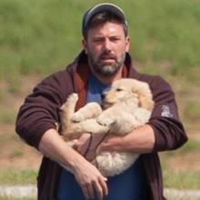 Ben Affleck mit einem Hunde-Welpen.