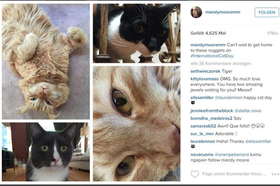 Mandy Moore + Ryan Adams: Auf Instagram postet Mandy Moore regelmäßig Schnappschüsse ihrer süßen Vierbeiner. Das sind vier ihrer insgesamt sechs Katzen.