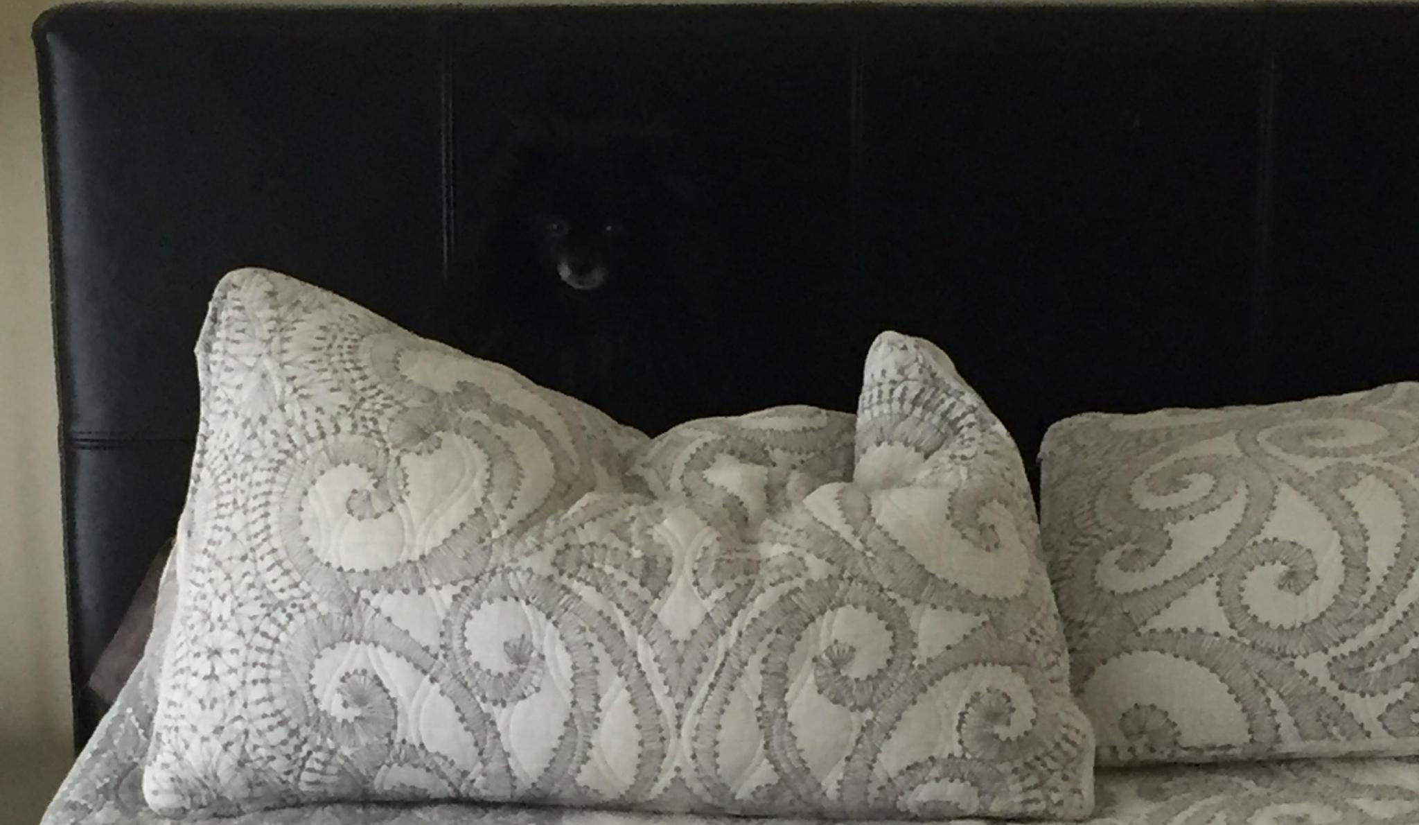 Suchbild: Wer findet das versteckte Tier?