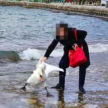 Alles nur für ein Foto!: Touristin tötet Schwan