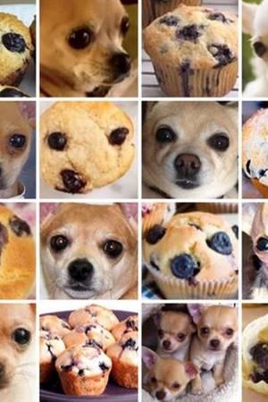 Chihuahua oder Muffin?