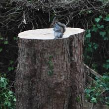 Eichhörnchen ohne Zuhause: Der traurigste Moment ever