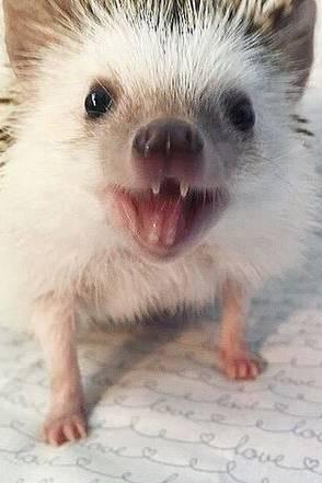 Instagram Huff The Hedgehog Ist Der Neue Instagram Star Galade