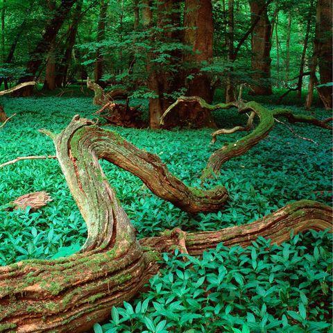 Oscars Herzogtum: Natur in Skane