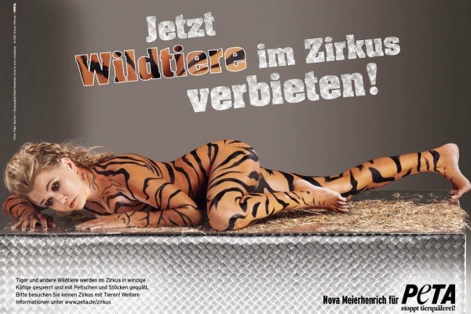 Für PETA schlüpft die Schauspielerin und Moderatorin Nova Meierhenrich in die Rolle eines Tigers, um sich für ein bundesweites V
