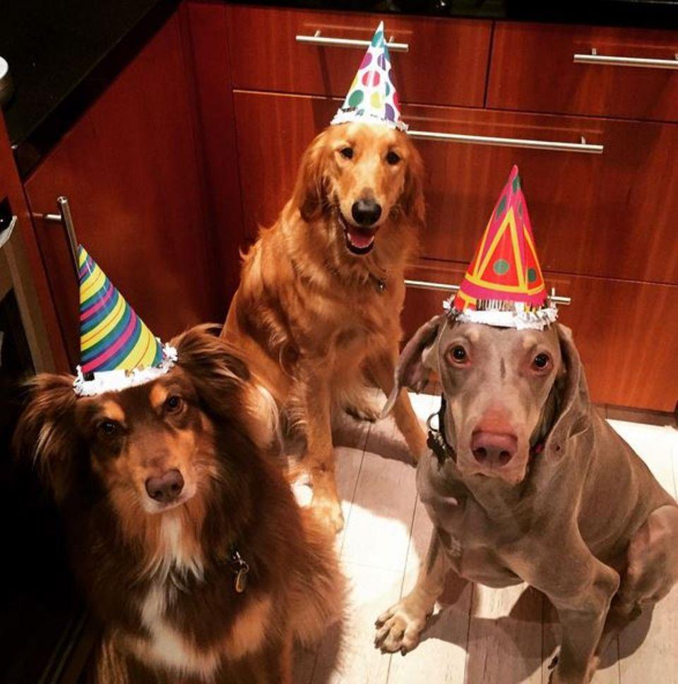 Amanda Seyfried schmeißt für Finn eine tierische Party zum 6. Geburtstag.