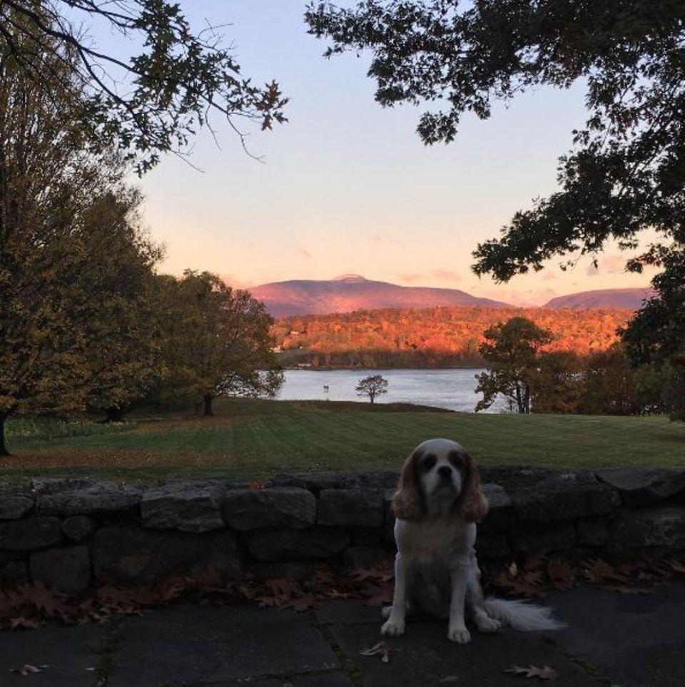 Liv Tyler erfreut uns mit einem schönen Foto der herbstlichen Landschaft um New York und ihres Hündchens.