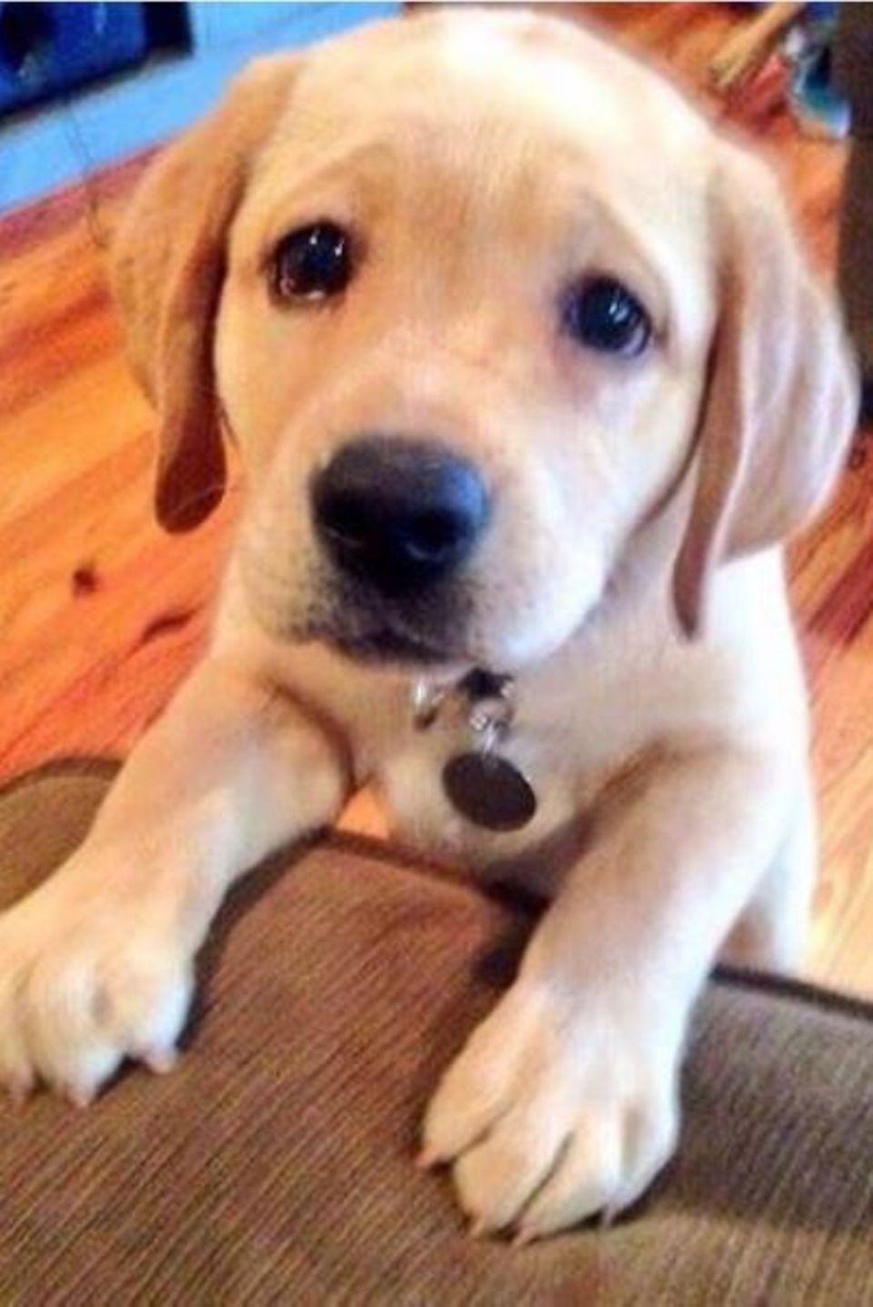 """Kann ein Hund süßer gucken? Der Welpe von Olivia Culpo hat einen """"Notfall"""", schreibt sie."""