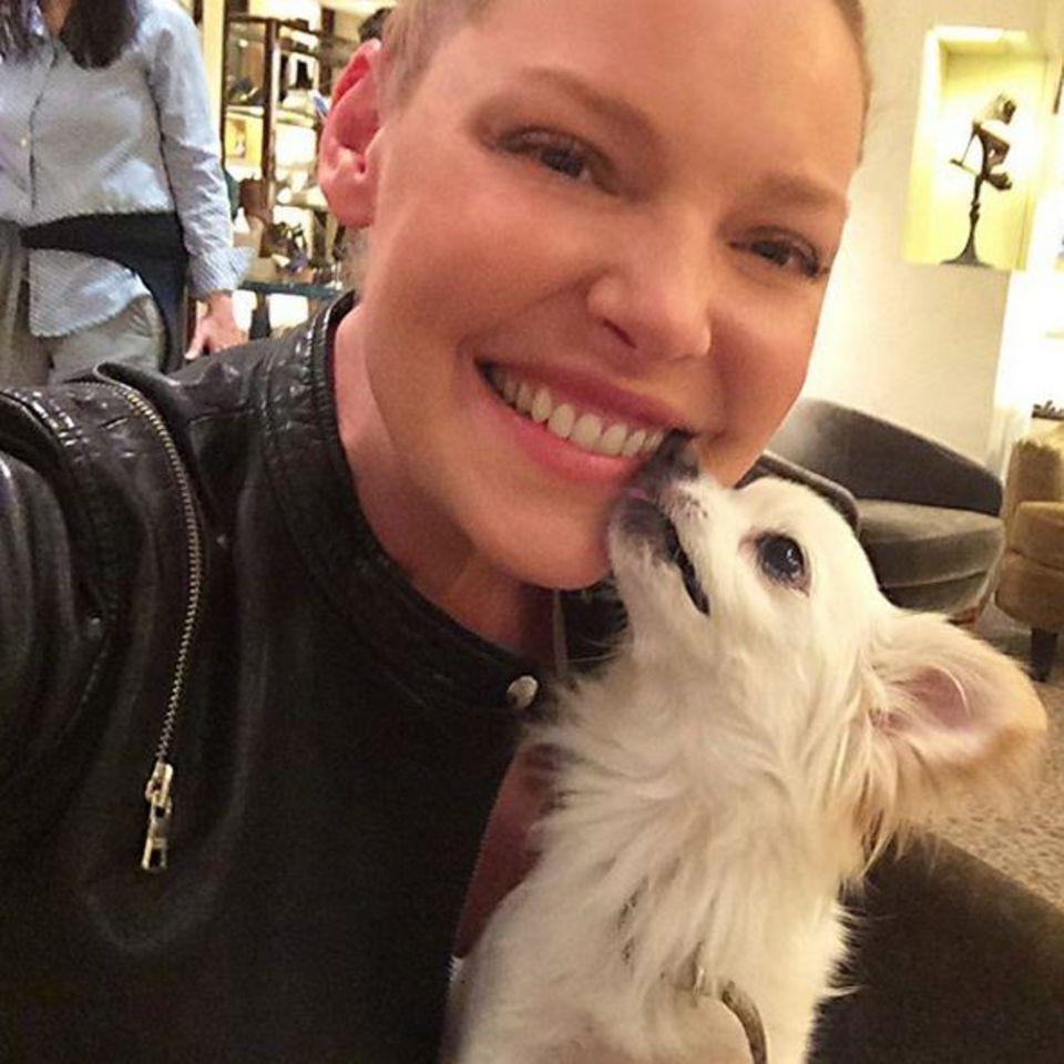 Stolz zeigt Katherine Heigl ihren kleinen Hund auf Instagram, den sie adoptiert hat.