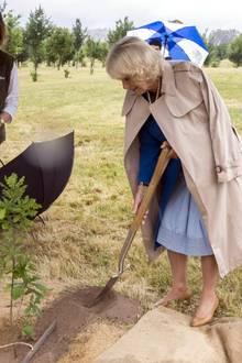 Herzogin Camilla greift während des Staatsbesuchs in Australiens Hauptstadt Canberra zur Schaufel und pflanz einen Baum.