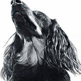 Atollo, der Hund: Wochenlang hatte ganz Deutschland nur ein Thema: Knut! Mal ehrlich, waren Sie eifersüchtig?
