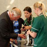 """Jack Russel Jasper ist im """"North Highland College"""" und wird Prinz Charles vorgestellt. Unter der Aufsicht einer Veterinär-Krankenschwester zückt er das Stethoskop und hört den vierbeinigen Patienten ab."""