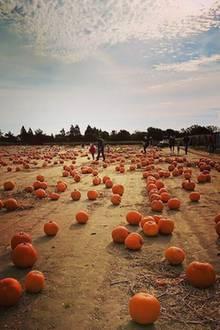 Stimmungsvolles Foto vom Ausflug mit der Familie: Nicky Hilton ist total in Halloweenlaune.