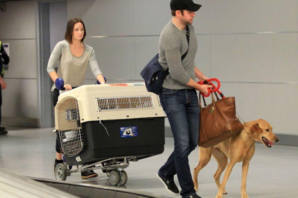 Der Hund von Emily Blunt und John Krasinski soll es beim Fliegen so angenehm wie möglich haben.