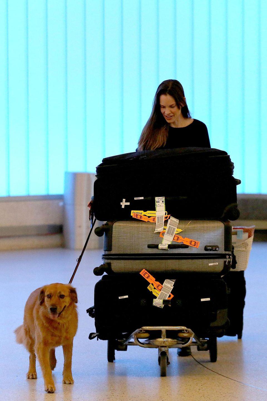Mit viel Gepäck und ihrem Hund Rumi kommt Hilary Swank aus Paris zurück in Los Angeles am Flughafen an. Sie besuchte ihren Freund, den französischen Immobilienmakler Laurent Fleury.
