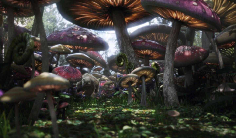 Wer pirscht sich denn hier durch den Pilzwald?