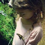 Dezember 2016  Vida lernt, dass man keinen Schmetterlinge jagen soll und beobachtet verzückt das kleine Insekt.