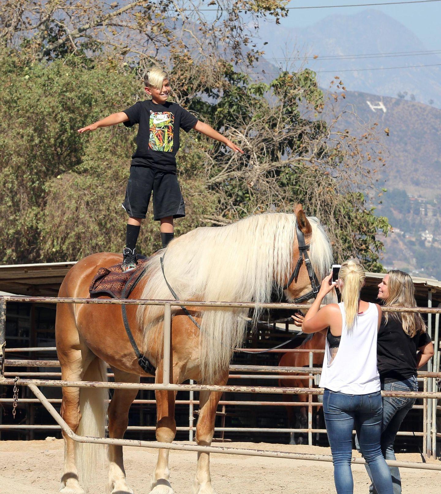 30. August 2014  Kingston präsentiert stolz seine Kunststücke auf dem Pferd.
