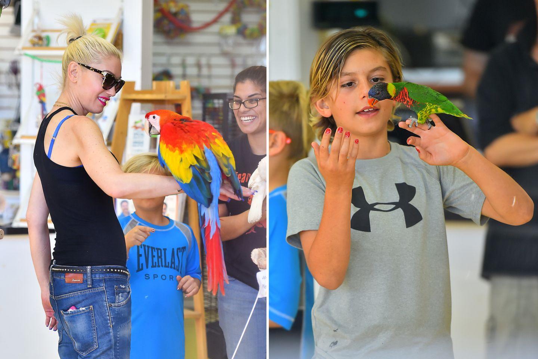 7. November 2015  Bei denen piept's wohl: Gwen Stefani ist mit ihren Jungs in einem Vogelladen in Santa Monica.