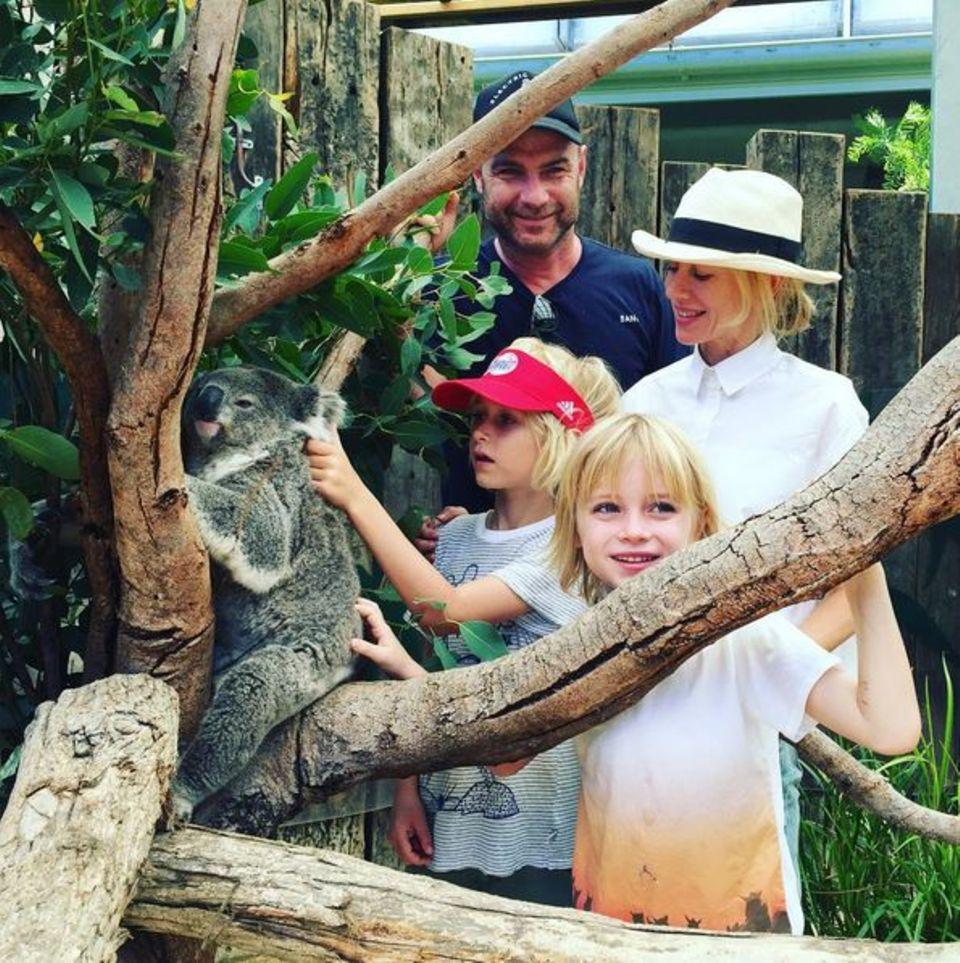 Liev Schreiber und Naomi Watts besuchen mit ihren Jungs den Toronga Zoo in Sydney.