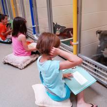 Tierliebe: Kinder lesen für schüchterne Hunde