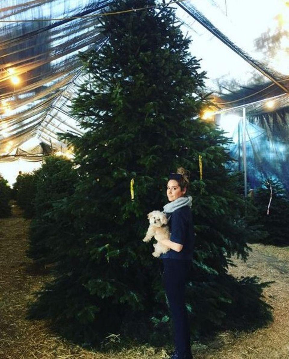Ashley Tisdale gibt die Verantwortung ab und läßt lieber ihren Hund Maui den Baum aussuchen. Selbstverständlich entscheidet sich der Kleine für den größten Baum.
