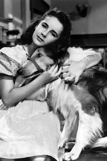 Elizabeth Taylor: Courage of Lassie (Held auf vier Pfoten) 1946