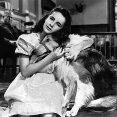 Elizabeth Taylor: Courage of Lassie (Held auf vier Pfoten) 1946