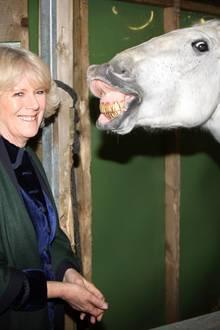 17. Dezember 2008: Dieser Schimmel scheint Gefallen an Camilla gefunden zu haben