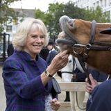 Herzogin Camilla hat nicht nur einen guten Draht zu Menschen, auch Pferde fressen ihr buchstäblich aus der Hand. Und die Leckerlis, die sie extra in einer Tüte mitgebracht hat, sind offensichtlich gut angekommen.